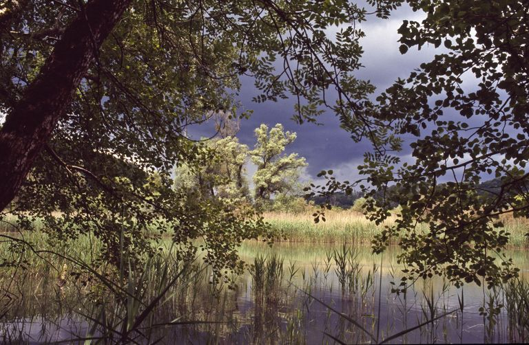 thundery atmosphere lake alluvial forest