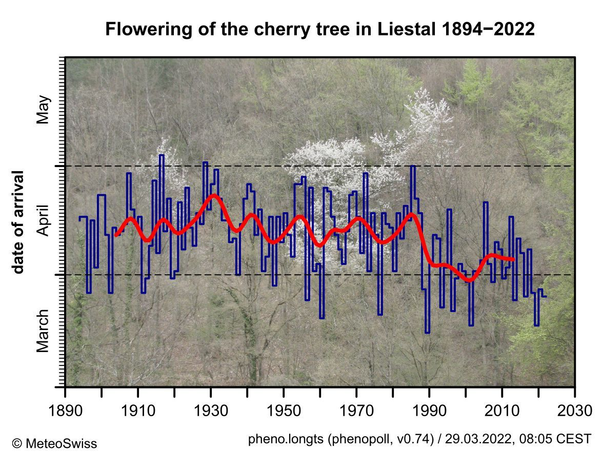 Blooming of the cherry tree in Liestal-Weideli since 1894. The red line shows the 20-year weighted average (Gaussian low-pass filter).